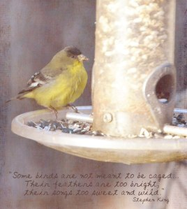Bird-Uncaged