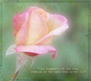 The-Fragrance-of-the-Rose-Bonus-Video-Piece