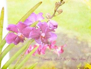 Magenta-Orchid-KK-Texture