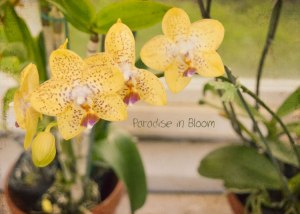 Paradise-in-Bloom