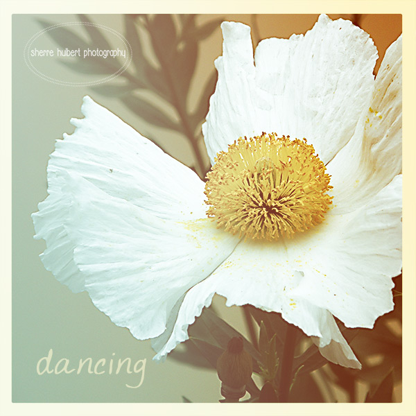 Dancing-copy