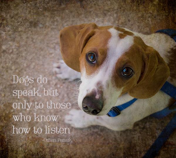 Dogs-Do-Speak-Pismo-copy