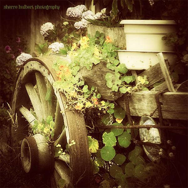 Friday-Find-Mendocino-Garden-July-19-copy