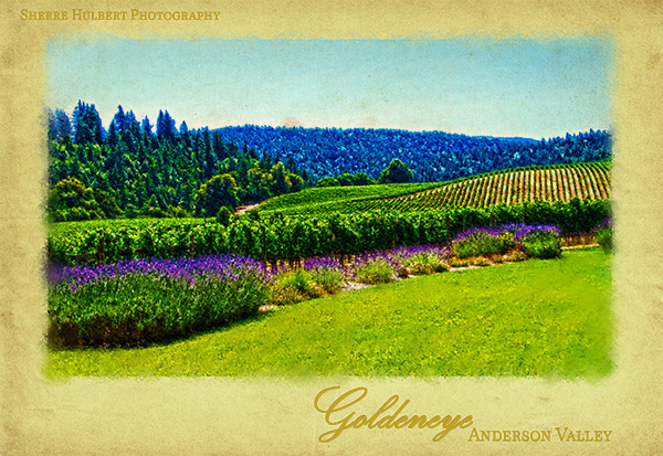 Goldeneye-Winery-Pastel-version2-copy
