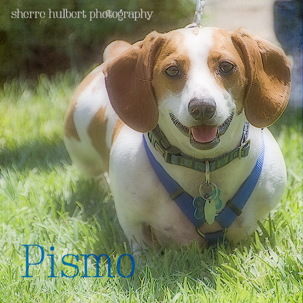 Pismo-at-Goldeneye-copy