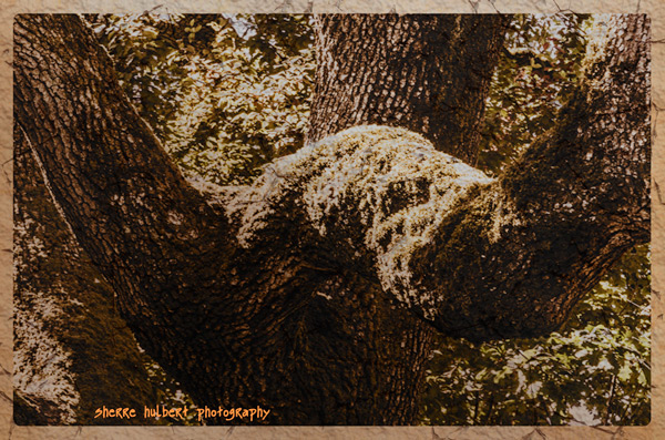 Oak-Tree-Close-Up-Lower-Res