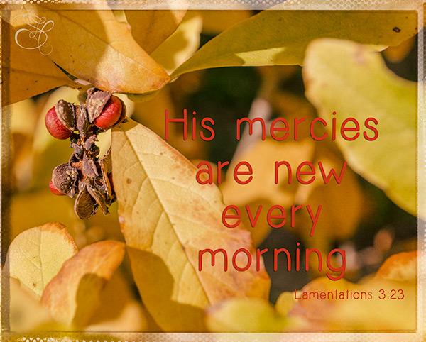 His-Mercies-copy