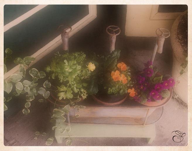 LaConner-Plant-Pots