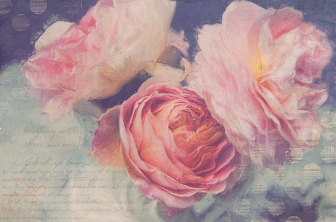 Painterly-Roses-Abraham-Darby-copy