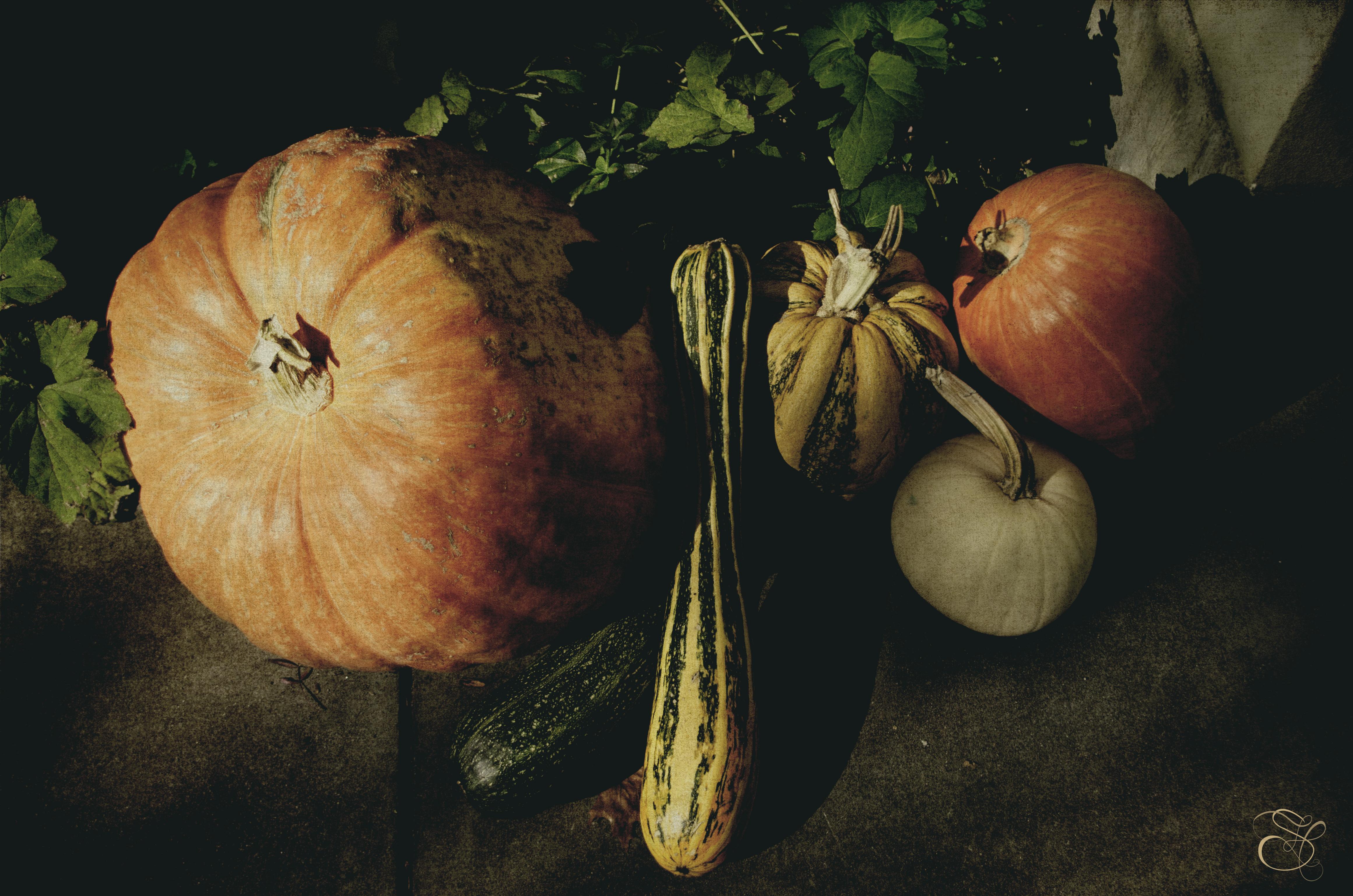 Pumpkins in Healdsburg copy.jpg